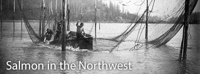 Salmon in the Norhtwest